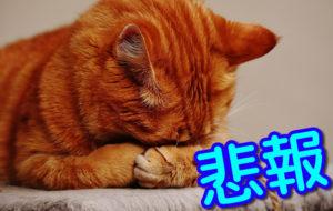 【悲報】東京都民、頭おかしい