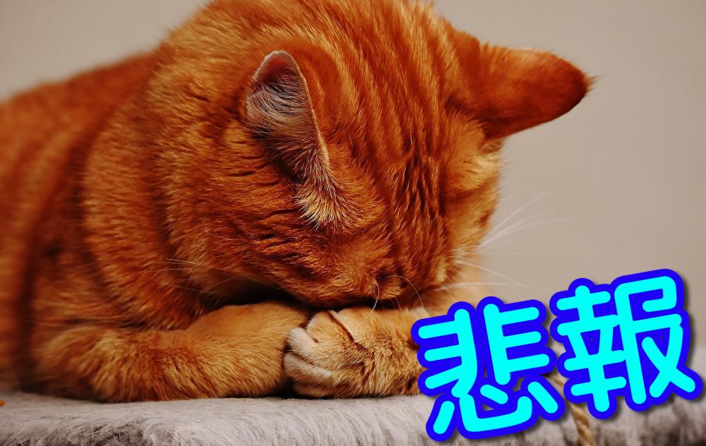 【悲報】一年間毎日家系ラーメン食べ続けた結果www